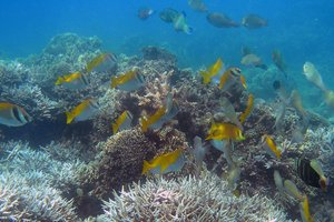 Snorkelling in Phu Quoc
