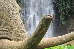Spirited Away: Dalat's Bo Bla Waterfall