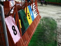 Greyhound Race, the things to do in Vung Tau