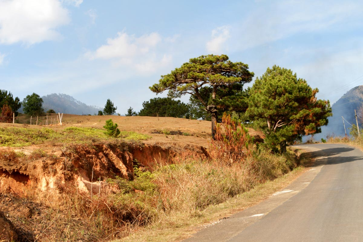 The Zebras of Dalat: A Langbiang Trekking Tour