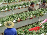 How Organic is Vietnam?