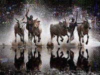 Ox-racing festival in An Giang